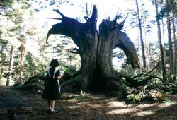 Pan's Labyrinth : image 159050